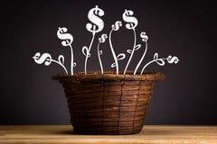 Pianta di investimento Fotografia Stock Libera da Diritti