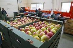 Pianta di lavorazione della frutta, Polonia, Lubelskie, 08 2014 immagine stock libera da diritti