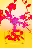 Pianta di pisello rossa in una bottiglia di vetro Fotografia Stock