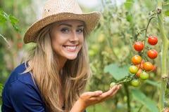 Pianta di pomodori di sguardo bionda graziosa Fotografia Stock Libera da Diritti
