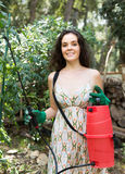 Pianta di pomodori di spruzzatura del giardiniere della donna Fotografia Stock Libera da Diritti