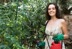 Pianta di pomodori di spruzzatura del giardiniere della ragazza Immagine Stock