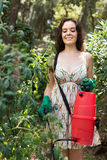 Pianta di pomodori di spruzzatura del giardiniere femminile Fotografia Stock