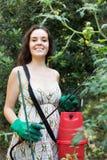 Pianta di pomodori di spruzzatura del giardiniere femminile Immagini Stock Libere da Diritti