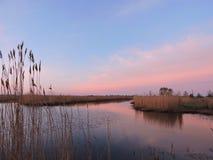 Pianta di Reed vicino al lago, alba Fotografia Stock Libera da Diritti