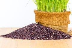 Pianta di riso Immagini Stock Libere da Diritti