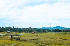 Pianta di riso di lavoro dell'agricoltore in azienda agricola della Tailandia Immagine Stock