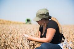 Pianta di soia examing della giovane ragazza dell'agricoltore durante il raccolto Immagini Stock Libere da Diritti