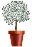 Pianta di soldi in un POT Fotografie Stock Libere da Diritti