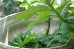 Pianta di spinaci immagine stock