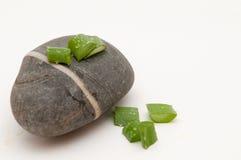 Pianta di vera dell'aloe sulla pietra Immagini Stock Libere da Diritti