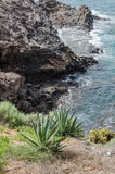 Pianta di vera dell'aloe sulla riva di mare Immagine Stock Libera da Diritti