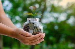 Pianta di vetro del barattolo dell'albero della moneta che cresce dalle monete fuori del concetto finanziario di vetro di risparm fotografie stock