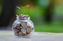 Pianta di vetro del barattolo dell'albero della moneta che cresce dalle monete fuori del concetto finanziario di vetro di risparm fotografia stock