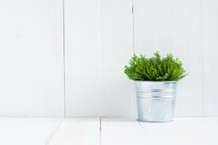 Pianta domestica verde Fotografia Stock Libera da Diritti