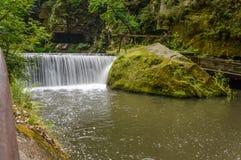 Pianta e cascate in una foresta fotografia stock libera da diritti