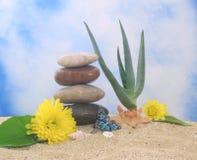 Pianta e fiori dell'aloe Fotografia Stock