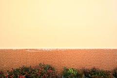 Pianta e parete Fotografia Stock Libera da Diritti
