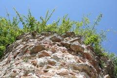 Pianta e parete Fotografia Stock
