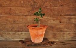 Pianta e parete di legno Fotografia Stock Libera da Diritti