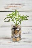 Pianta e soldi in barattolo Fotografia Stock