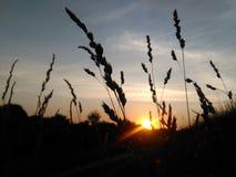Pianta e tramonto Immagine Stock