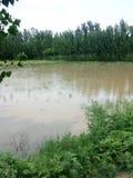 Pianta ed acqua piovana Fotografia Stock