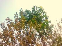 Pianta ed alberi fotografia stock
