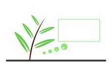 Pianta/etichetta/Olive Oil Immagini Stock