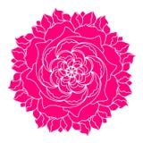 Pianta etnica della peonia del fiore di logo rosa di concetto Elemento della molla della decorazione o di progettazione floreale  royalty illustrazione gratis
