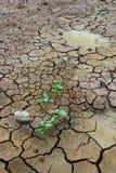 Pianta in fango incrinato secco Fotografia Stock Libera da Diritti
