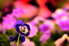 Pianta floreale coltivata serra - pianta del fiore Fotografia Stock