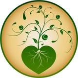 Pianta floreale del cuore Fotografia Stock