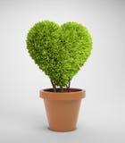 Pianta a forma di del cuore Fotografia Stock