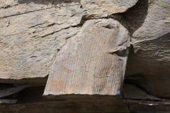 Pianta fossile nella sua roccia ospite immagine stock
