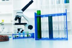 Pianta geneticamente modificata provata nella capsula di Petri Fotografie Stock