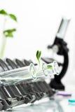 Pianta geneticamente modificata provata in provetta Fotografia Stock Libera da Diritti