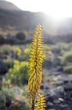 Pianta gialla Fotografia Stock Libera da Diritti