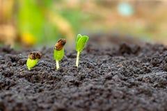 Pianta giovane a disposizione La piantina sta sviluppando nel suolo con luce solare /Wherever l'albero è piantato fotografie stock libere da diritti