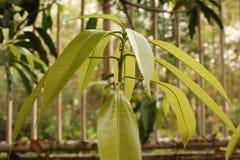 Pianta, giovane pianta verde con le formiche Fotografie Stock