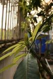 Pianta, giovane pianta verde con le formiche Immagini Stock Libere da Diritti