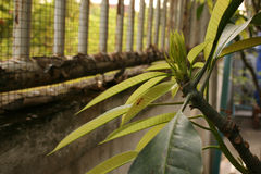 Pianta, giovane pianta verde con le formiche Immagine Stock