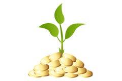 Pianta giovane verde con soldi Fotografie Stock Libere da Diritti