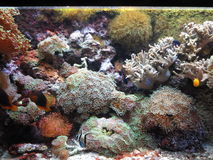 Pianta marina Fotografia Stock Libera da Diritti