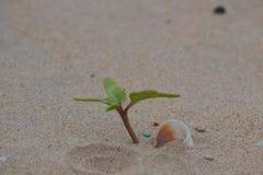 Pianta minuscola che cresce su una spiaggia Fotografia Stock Libera da Diritti