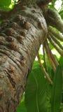 pianta, natura, buon ambiente Immagine Stock