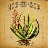 Pianta naturale dell'aloe del farmacista royalty illustrazione gratis