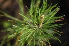 Pianta nella foresta Fotografie Stock