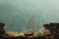 Pianta nelle rovine Fotografie Stock