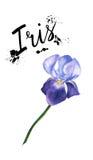 Pianta porpora del fiore dell'iride dell'illustrazione dell'acquerello Fiore dell'iride del Wildflower in uno stile dell'acquerel Fotografia Stock Libera da Diritti